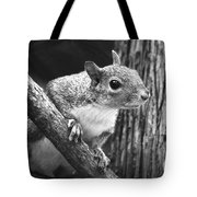 Squirrel Black And White Tote Bag