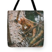 Squirrel In A Tree Tote Bag