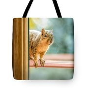 Squirrel In The Window Tote Bag