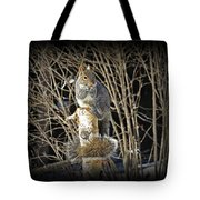 Squirrel On Birch Post Tote Bag