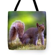 Squirrel On Grass Tote Bag