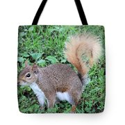 Squirrel On The Ground Tote Bag