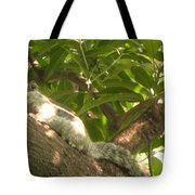Squirrel On The Tree Tote Bag