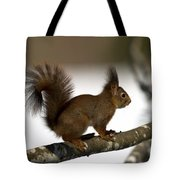 Squirrel Profile Tote Bag