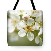 St Lucie Cherry Blossom Tote Bag