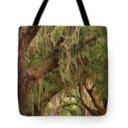 St Simons Island Oaks Tote Bag