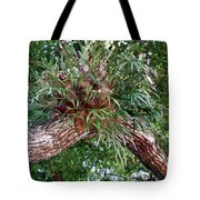 Stag Horn Fern 11 Tote Bag