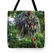 Stag Horn Fern 9 Tote Bag