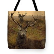 Williams Fine Art Stag Party The Series  Tote Bag