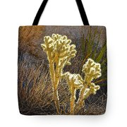 Staghorn Cholla Cactus Catching Sunlight In Joshua Tree Np-ca Tote Bag