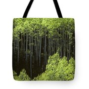 Stand Of Birch Trees New Growth Spring Rich Green Leaves Tote Bag