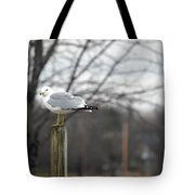 Standing Seagull Tote Bag