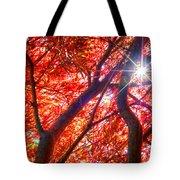 Star Light Thru Maple Tote Bag
