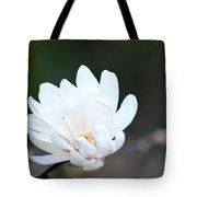 Star Magnolia Bloom Tote Bag