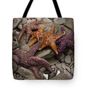 Starfish 2 Tote Bag