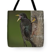 Starling And Young Tote Bag