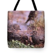 Starlings Fight Tote Bag