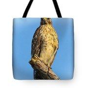 Stately Red-shouldered Hawk Tote Bag