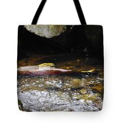 Steelhead Resting In The Shallows Tote Bag