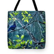 Steller's Jay In A Tree Tote Bag