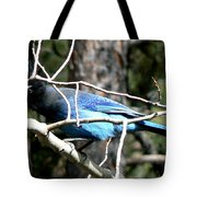 Steller's Jay - Peaking Through Branches Tote Bag