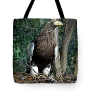 Stellers Sea Eagle Tote Bag