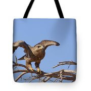 Steppe Eagle Aquila Nipalensis 1 Tote Bag