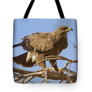 Steppe Eagle Aquila Nipalensis 2 Tote Bag