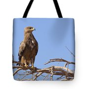 Steppe Eagle Aquila Nipalensis Tote Bag