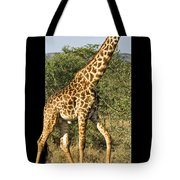 Steppin Out Tote Bag