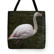 Stepping Out. Tote Bag