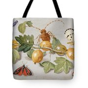Still Life Of Branch Of Gooseberries Tote Bag by Jan Van Kessel