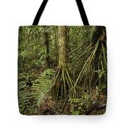 Stilt Roots In The Rainforest Ecuador Tote Bag