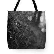 Stone Forest Trail Tote Bag