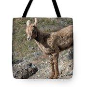 Stone Lamb Tote Bag