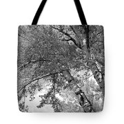 Storm Over The Cottonwood Trees - Black And White Tote Bag