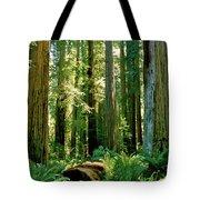 Stout Grove Coastal Redwoods Tote Bag