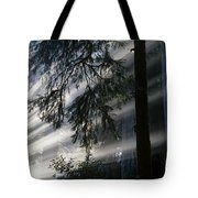 Stout Grove Redwoods With Sunrays Breaking Through Fog Tote Bag