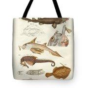 Strange Cartilageous Fish Tote Bag
