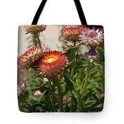 Straw Flowers Xerochrysum Bracteatum Tote Bag