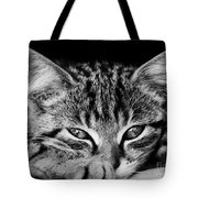 Stray Kitten Tote Bag