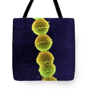 Streptococcus Bacteria Sem Tote Bag by Science Source