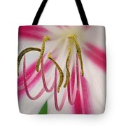 Striped Crinium Tote Bag