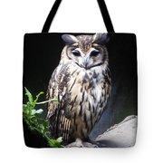 Striped Owl Tote Bag