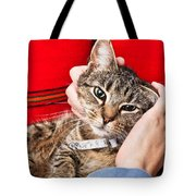 Stroking A Cat Tote Bag by Tom Gowanlock