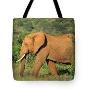Strolling Elephant Tote Bag