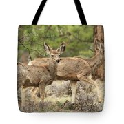 Strolling Through The Rockies Tote Bag