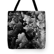 Study In Black And White 1 Tote Bag by Steve Patton