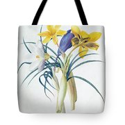 Study Of Four Species Of Crocus Tote Bag