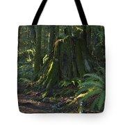 Stump And Fern Tote Bag